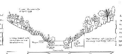 Vegetation transect along the Raspaculo River. Click for larger image.