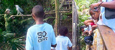 Visiting Schoolchildren watch Belize Zoo Harpy Eagle Eat Breakfast