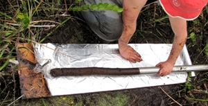 Peat Core from Sarstoon